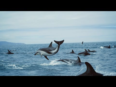 'The ocean and us' - BBC Earth, United Nations Ocean Conference
