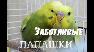 Когда птенец собирается выйти из гнезда...When the chick is about to leave the nest...