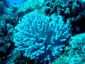 Diving in Rarotonga, spongy thing