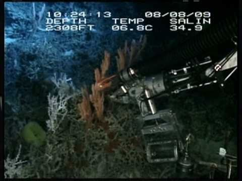 2011 OSLS - Deep Water Coral Reefs: Oases of the Ocean: Recent Discoveries and Conservation