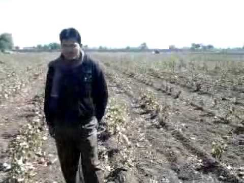 Picking Video survid Guj Jam Jam Hot 48 P2 S1 27Dec12114417 V0