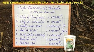 Mô hình nuôi cút thả vườn diện tích 50m vuông chi phí hết bao nhiêu?