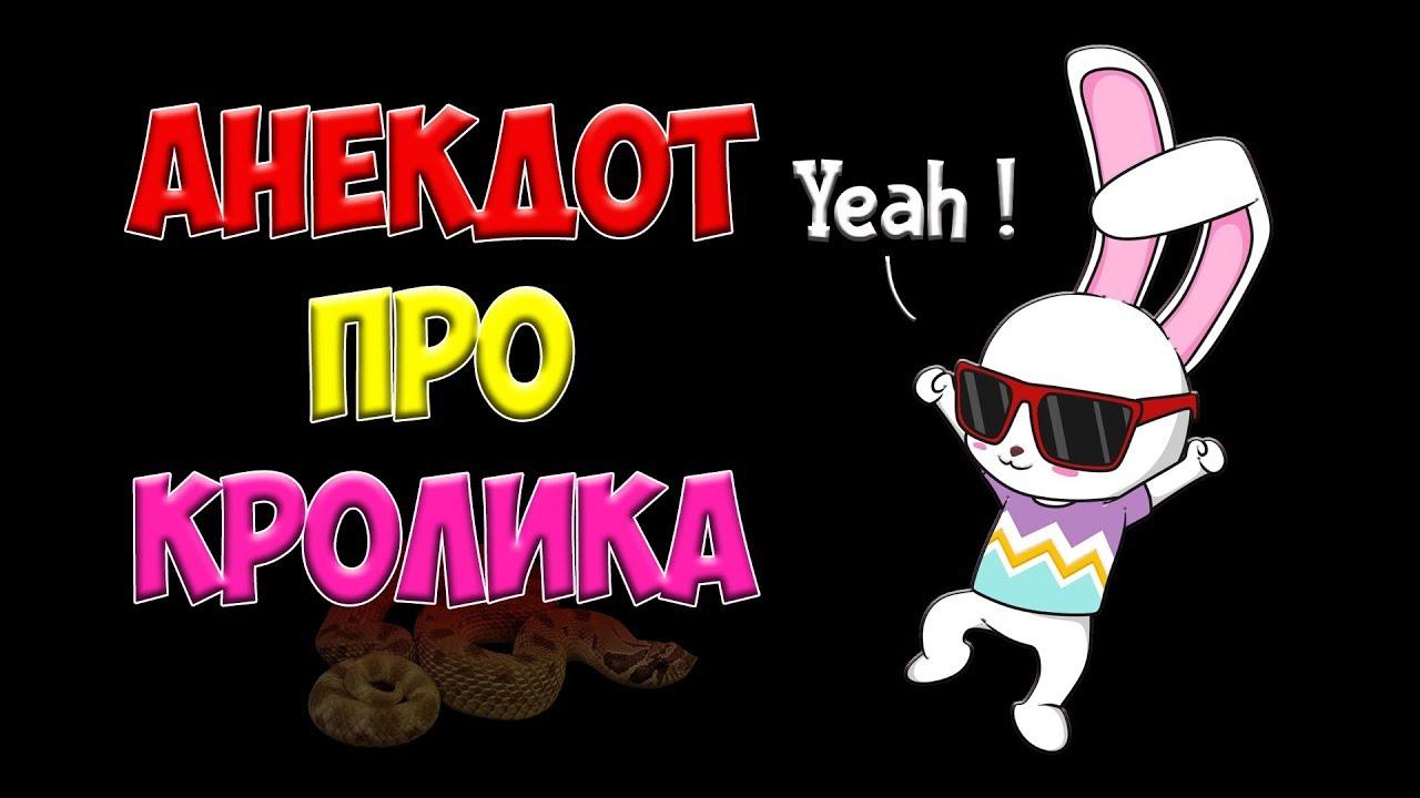 Анекдот Про Кролика