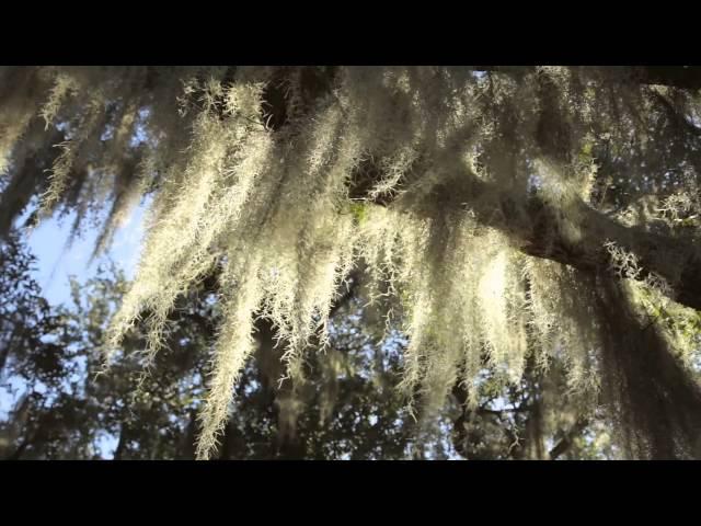 Audubon Park: A Beautiful Uptown Spot