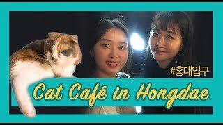 [OOOZ] Cat Cafe, Hongdae, Seoul, South Korea; How to travel around Korea