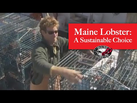 Maine lobster why it 39 s a sustainable seafood choice youtube for What time is it in maine right now