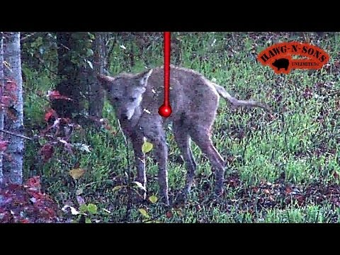 UGLIEST Coyote Kill Shot Ever - Biggest Deer Predator Hunting Lighted Nock