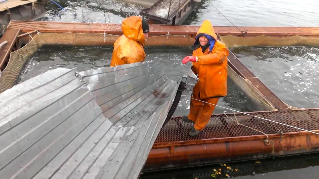Выращивание рыбы в садках 742