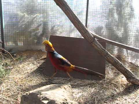 рыболовная база золотой фазан