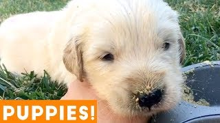 Cutest Puppies Playing Around 2018 | Funny Pet Videos