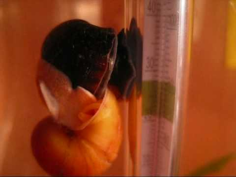 Snail Porn video