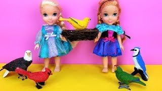 Elsa and Anna toddlers SAVE a bird ! Aviary - Barbie is the pet doctor - park - vet