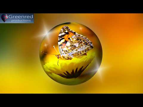 Happiness Frequency: Serotonin, Dopamine and Endorphin Release Music, Binaural Beats Relaxing Music