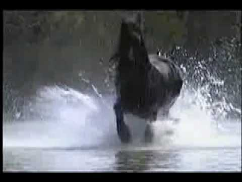 Beautiful Creatures – Horses