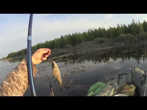 как поймать рыбу в тоболе