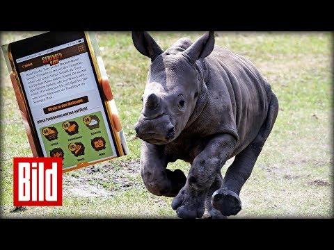 Tiere mit einer App füttern im Serengeti Park