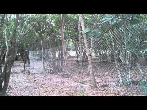 rede de capturar pássaros