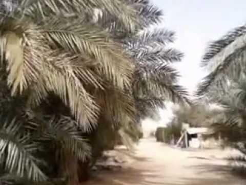 MENANAM POHON KURMA (TAMAR)