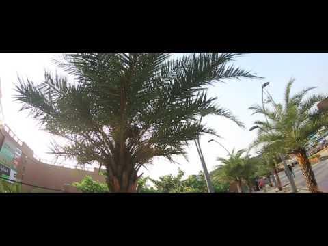 Arabic songs  channel 7
