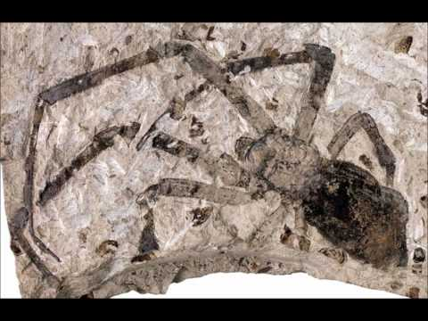 Largest Fossilized Spider Discovered.