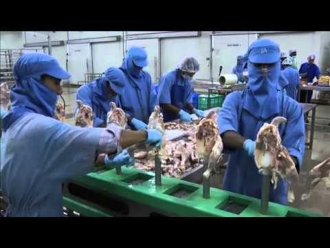Poultry Processing in India: From plan to plant
