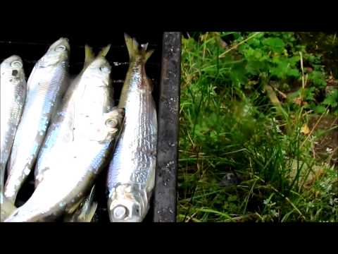 Fishing report - FUMELEME  29.9.2012 Video