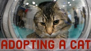 adopting a cat from a cat cafe
