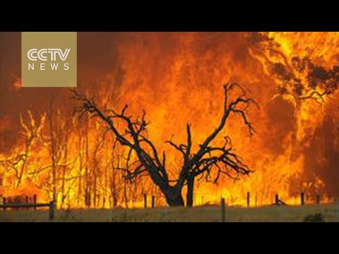 Australia Wildfires: Firefighters race against time to contain blaze