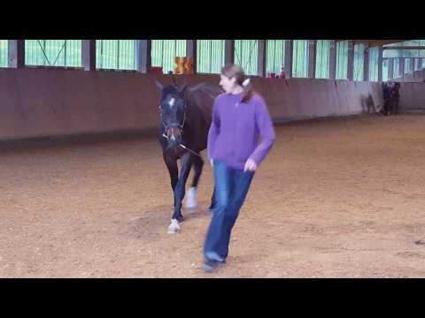 Erste mögliche Schritte zur Ausbildung eines jungen Pferdes