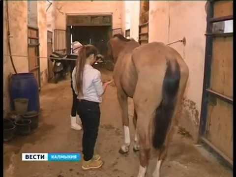 Миссия по спасению лошадей
