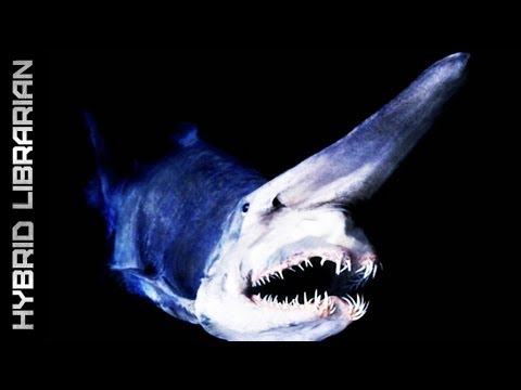 Deep Sea's 10 Most Amazing Creatures video