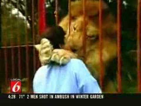 Leones - Un León abraza y besa a su cuidadora