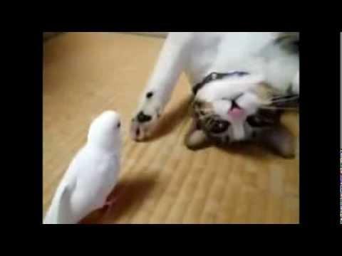 Кот и попугай...Попугай достает кота...прикольно как))))