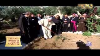 Romereports Vaticano Videos del Papa Francisco Homilias - El Papa Francisco planta un Olivo Argentino en Getsemaní
