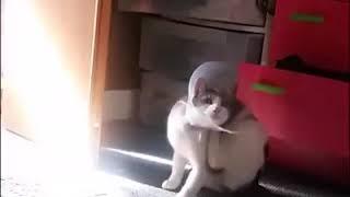 Funny cats part 2 قطط مضحكه