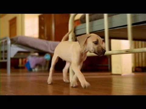 Chestnut Dog Movie
