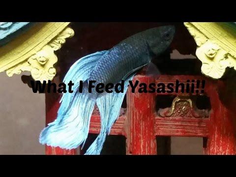 What I feed My Betta Fish!!