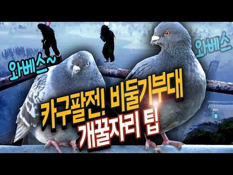 배그 카구팔전!! 비둘기 특수부대 개꿀자리 알아냄!! (너무 고지 점령)