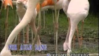 Auld Lang Syne Kid  - Sing And Learn