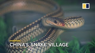 China's snake village, home to over 3 million snakes