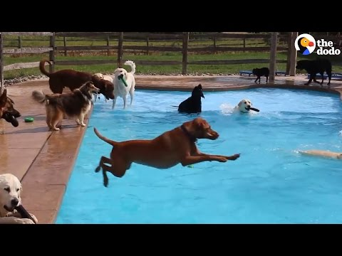 This May Be The World's Best Doggy Daycare