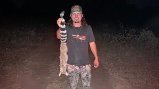 RINGTAIL CAT Hunting! Super Rare Texas animal