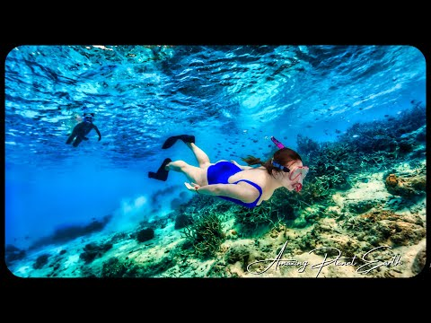 Snorkeling Siesta Key Hd  Point Of Rocks   2013 ....