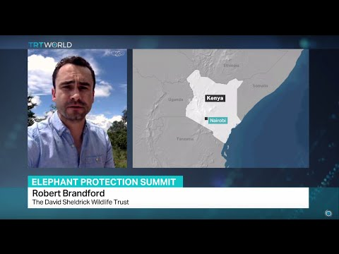 Interview with Robert Brandford from The David Sheldrick Wildlife Trust on Elephant Protection Summi