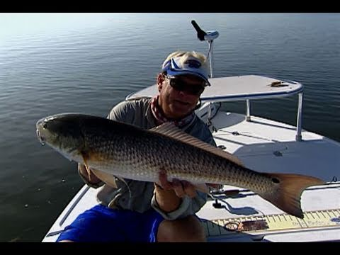 Chasing Tails - REDFISH shallow fishing