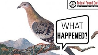 From Billions to Zero in 50 Years - The Extinction of the Passenger Pigeon