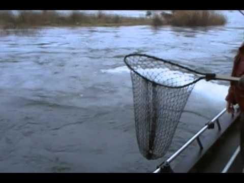 Winter Steelhead fishing - Blue Creek Cowlitz River 2011