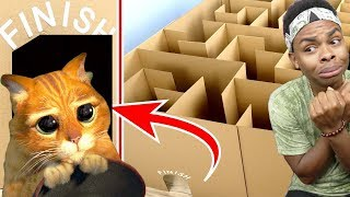 Giant Maze Labyrinth For Cat Kittens Can They Exit