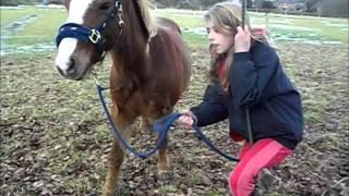 Remix ! Horse video x
