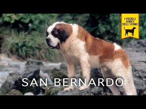 San Bernardo is listed (or ranked) 9 on the list The Best Fernando Poe, Jr. Movies